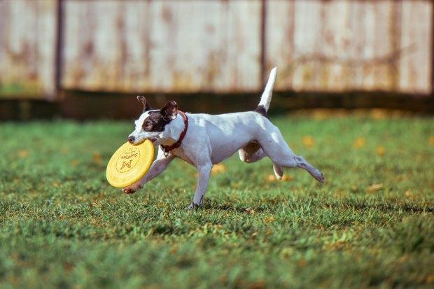 Dog tricks_july2017 #2
